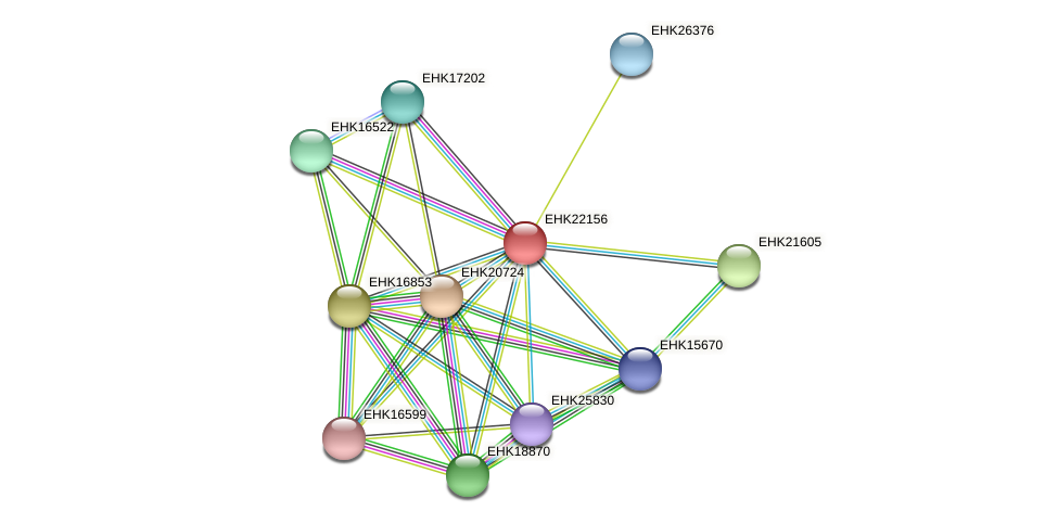 EHK22156 protein (Hypocrea virens) - STRING interaction network