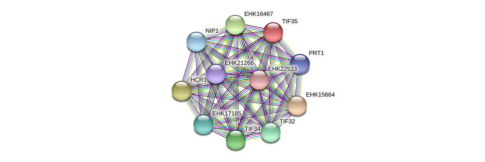 TIF35 protein (Hypocrea virens) - STRING interaction network
