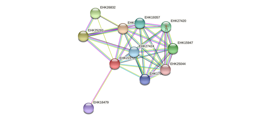 EHK22272 protein (Hypocrea virens) - STRING interaction network