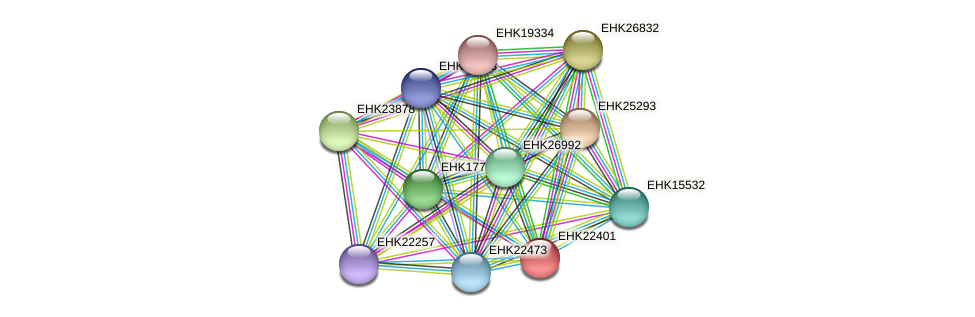 EHK22401 protein (Hypocrea virens) - STRING interaction network