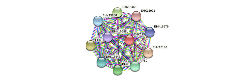 EHK22521 protein (Hypocrea virens) - STRING interaction network