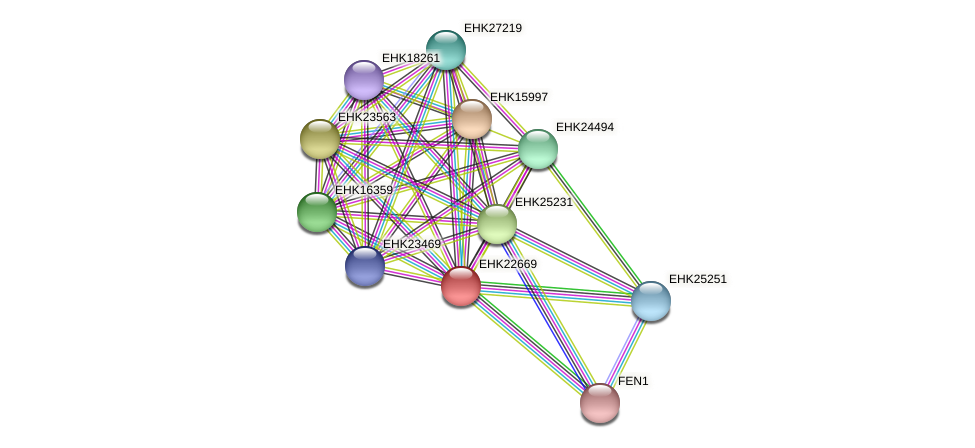 EHK22669 protein (Hypocrea virens) - STRING interaction network