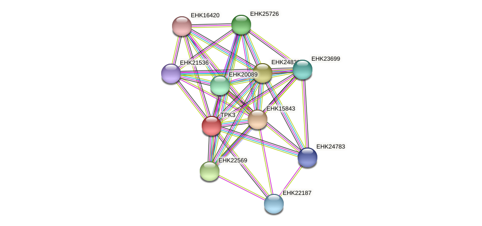 TPK3 protein (Hypocrea virens) - STRING interaction network