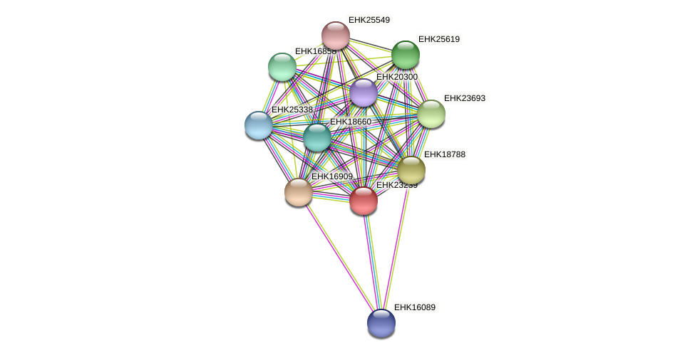 EHK23239 protein (Hypocrea virens) - STRING interaction network