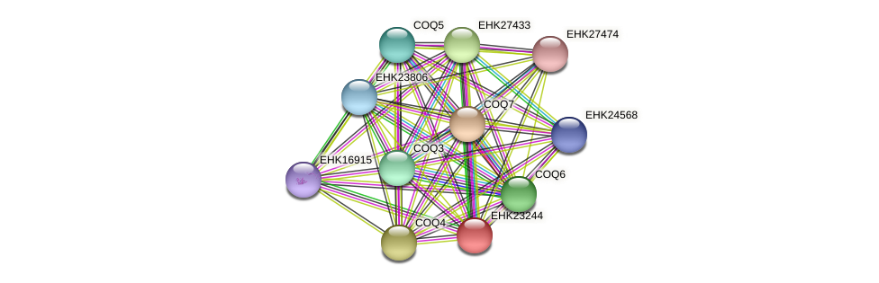 EHK23244 protein (Hypocrea virens) - STRING interaction network