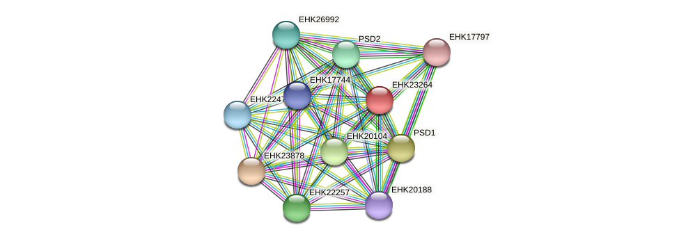 EHK23264 protein (Hypocrea virens) - STRING interaction network