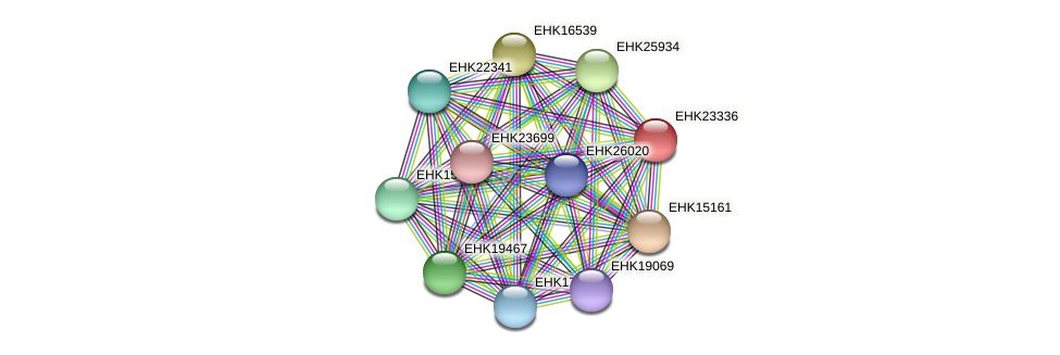 EHK23336 protein (Hypocrea virens) - STRING interaction network