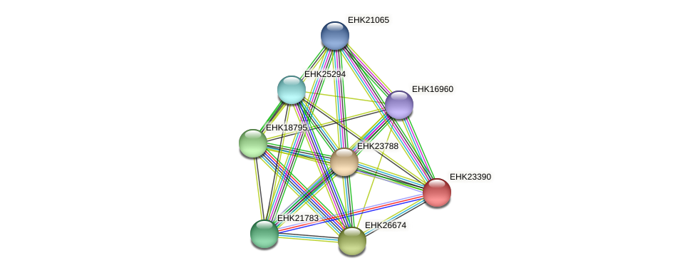 EHK23390 protein (Hypocrea virens) - STRING interaction network