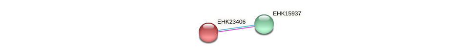 EHK23406 protein (Hypocrea virens) - STRING interaction network