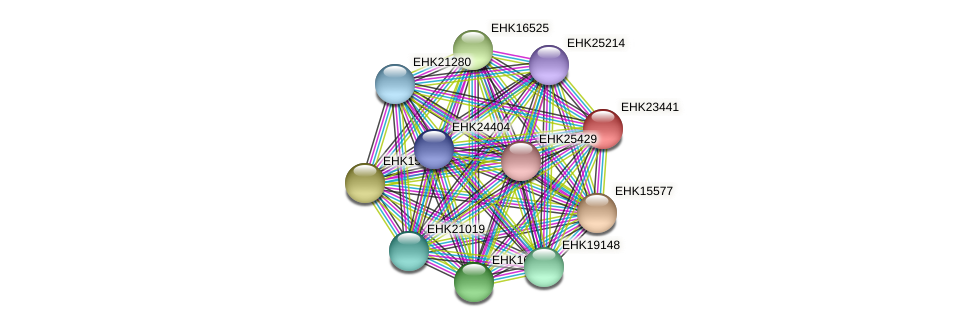 EHK23441 protein (Hypocrea virens) - STRING interaction network