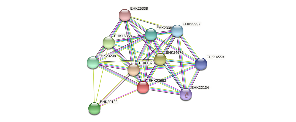 EHK23693 protein (Hypocrea virens) - STRING interaction network