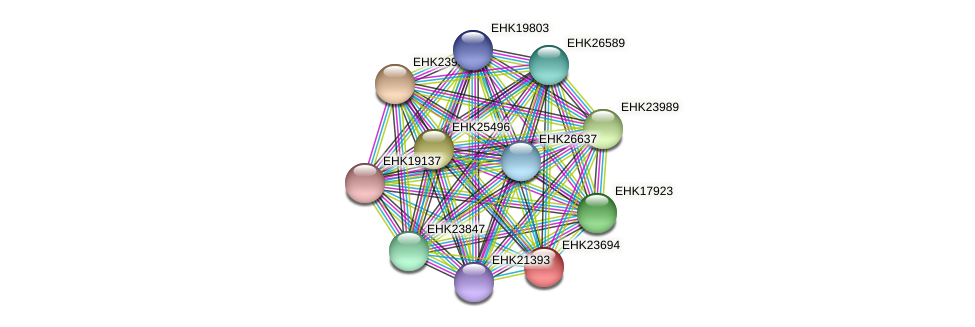 EHK23694 protein (Hypocrea virens) - STRING interaction network