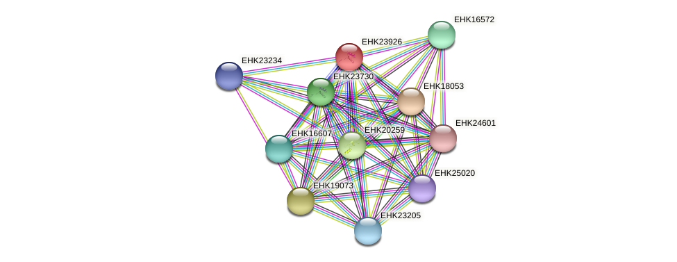 EHK23926 protein (Hypocrea virens) - STRING interaction network