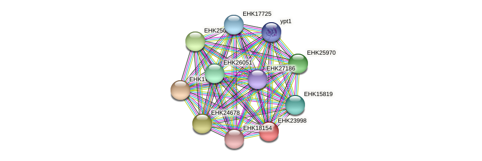 EHK23998 protein (Hypocrea virens) - STRING interaction network