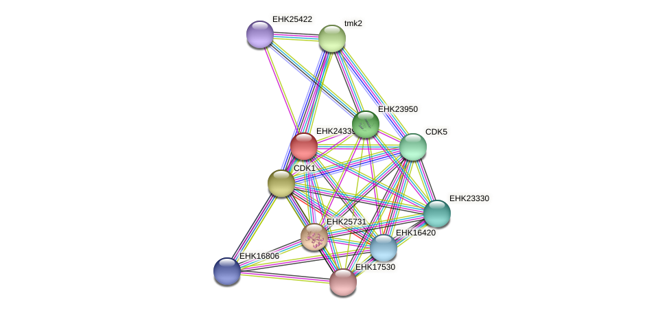 EHK24339 protein (Hypocrea virens) - STRING interaction network