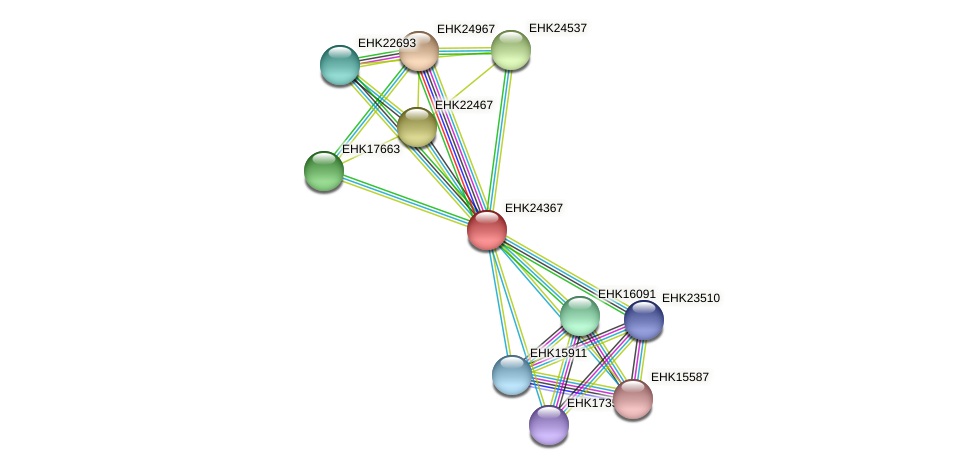 EHK24367 protein (Hypocrea virens) - STRING interaction network