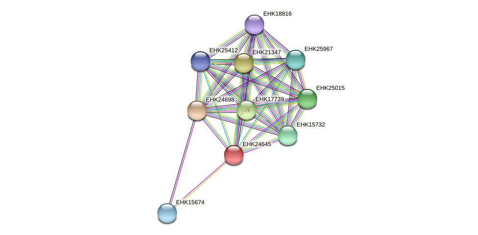 EHK24645 protein (Hypocrea virens) - STRING interaction network
