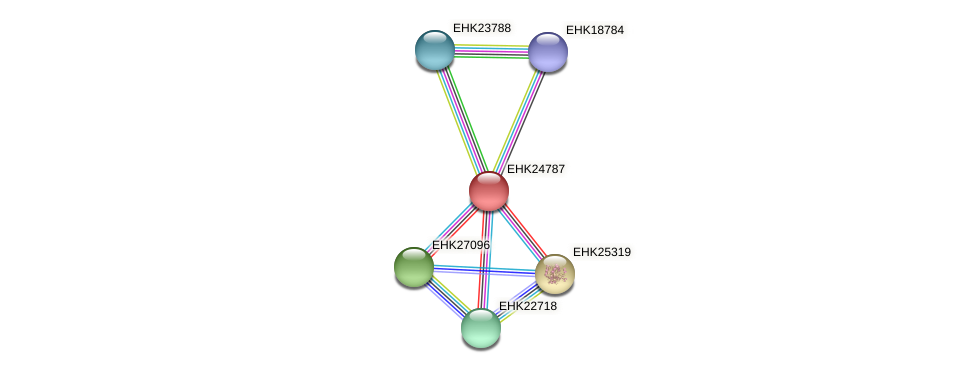 EHK24787 protein (Hypocrea virens) - STRING interaction network
