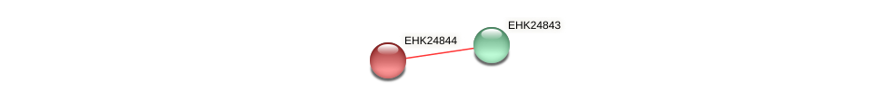EHK24844 protein (Hypocrea virens) - STRING interaction network