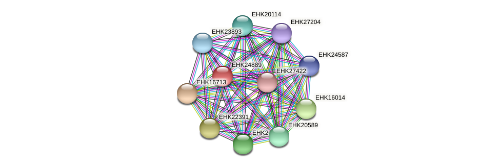 EHK24889 protein (Hypocrea virens) - STRING interaction network