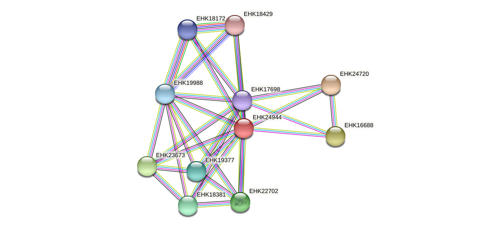 EHK24944 protein (Hypocrea virens) - STRING interaction network