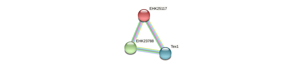 EHK25117 protein (Hypocrea virens) - STRING interaction network
