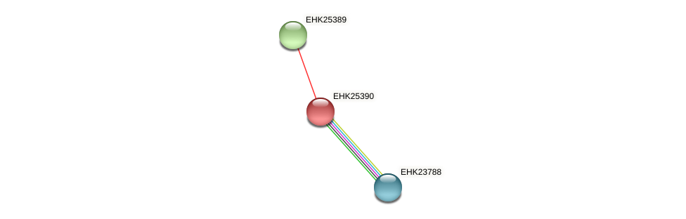 EHK25390 protein (Hypocrea virens) - STRING interaction network