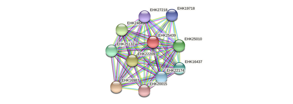 EHK25439 protein (Hypocrea virens) - STRING interaction network