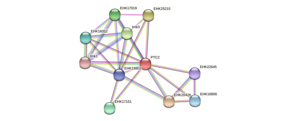 PTC2 protein (Hypocrea virens) - STRING interaction network