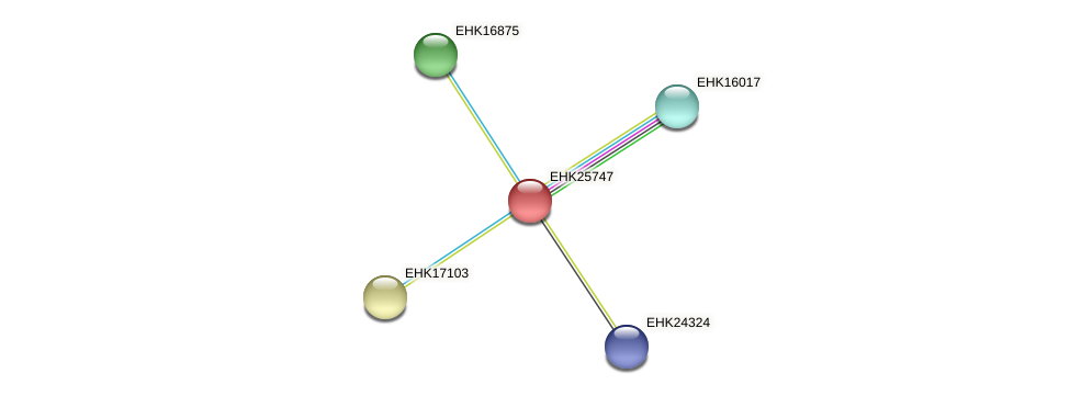 EHK25747 protein (Hypocrea virens) - STRING interaction network