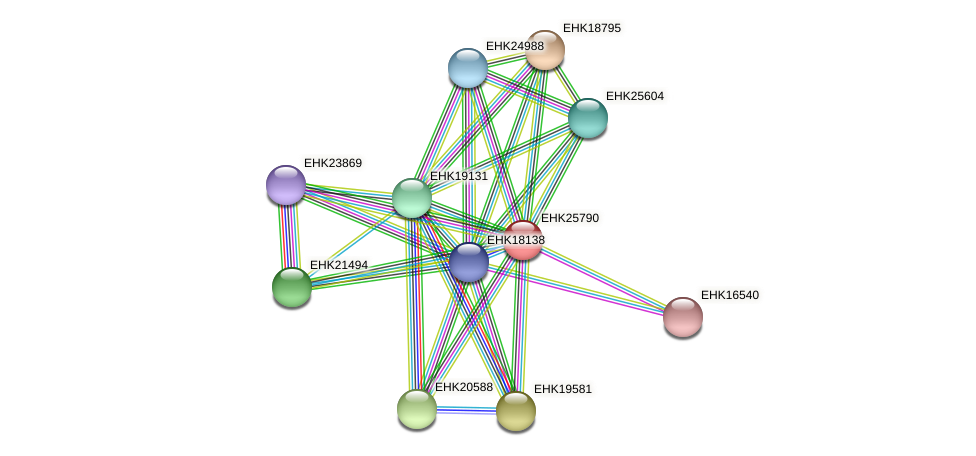 EHK25790 protein (Hypocrea virens) - STRING interaction network