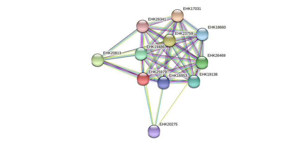 EHK25979 protein (Hypocrea virens) - STRING interaction network
