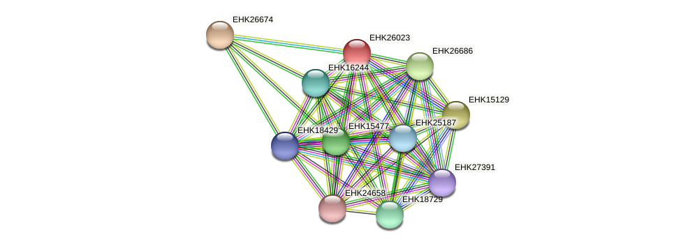 EHK26023 protein (Hypocrea virens) - STRING interaction network