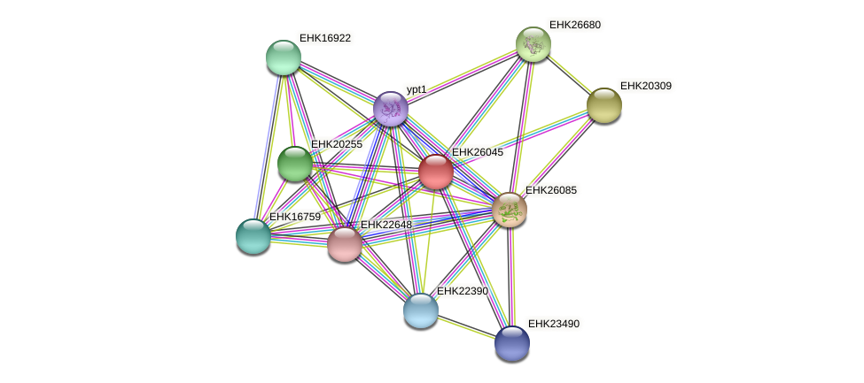 EHK26045 protein (Hypocrea virens) - STRING interaction network