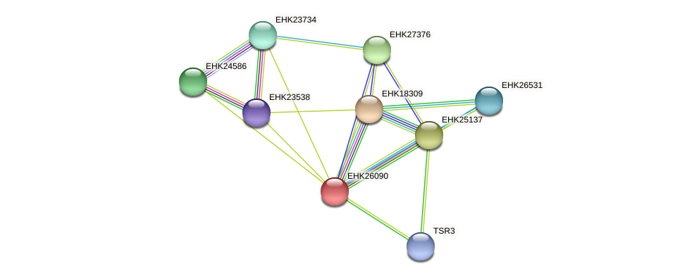 EHK26090 protein (Hypocrea virens) - STRING interaction network