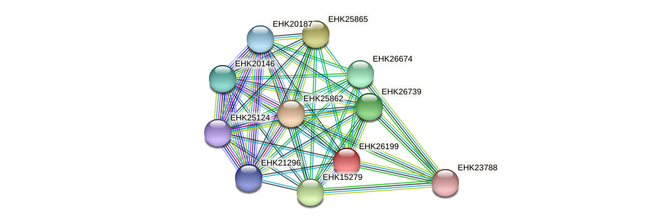 EHK26199 protein (Hypocrea virens) - STRING interaction network