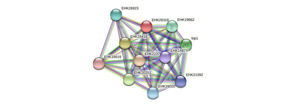 EHK26318 protein (Hypocrea virens) - STRING interaction network