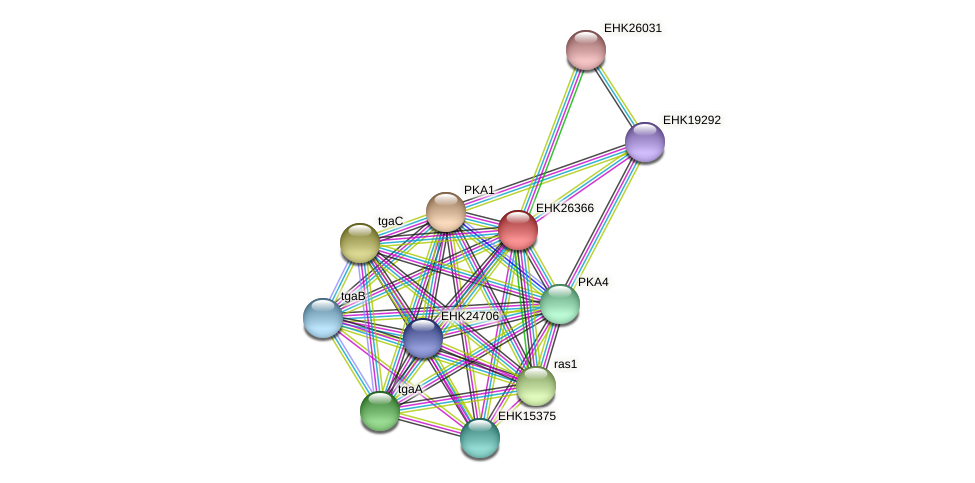 EHK26366 protein (Hypocrea virens) - STRING interaction network
