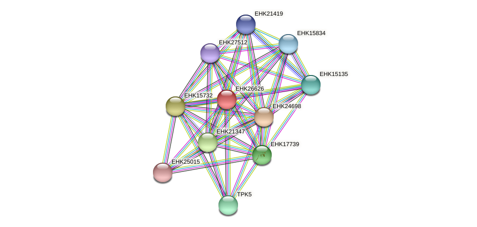 EHK26626 protein (Hypocrea virens) - STRING interaction network