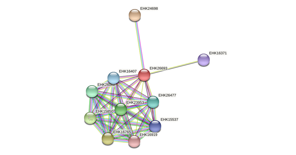 EHK26693 protein (Hypocrea virens) - STRING interaction network