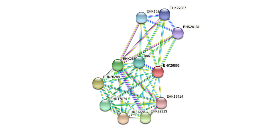 EHK26863 protein (Hypocrea virens) - STRING interaction network