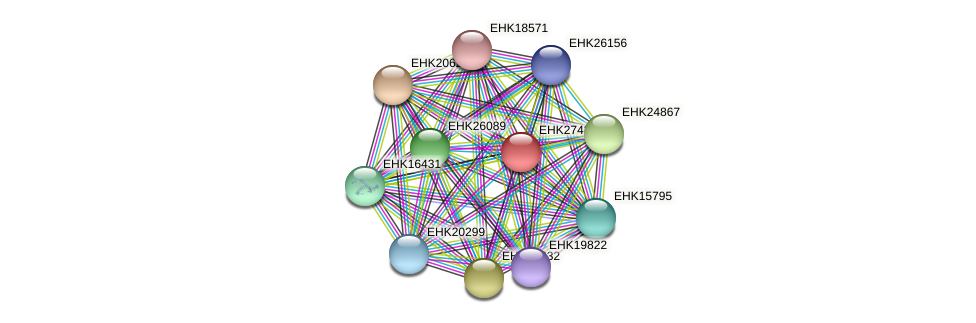 EHK27432 protein (Hypocrea virens) - STRING interaction network