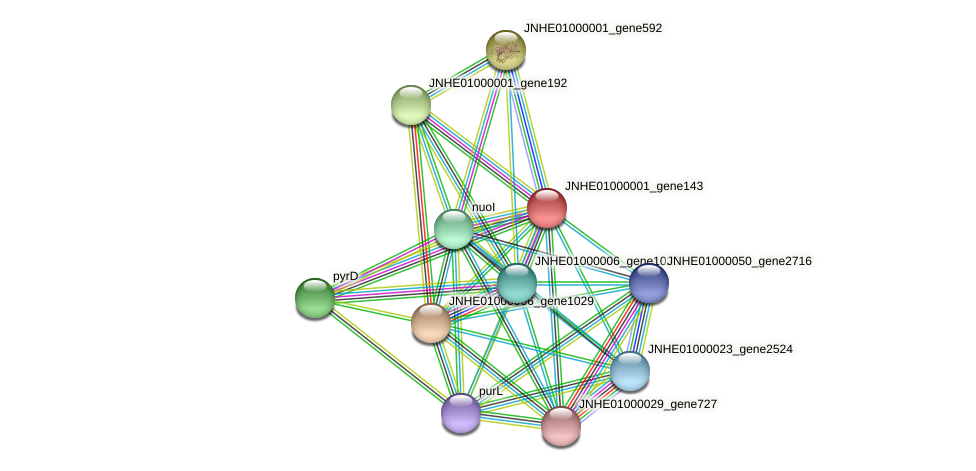 JNHE01000001_gene143 protein (Pseudomonas oleovorans) - STRING interaction network