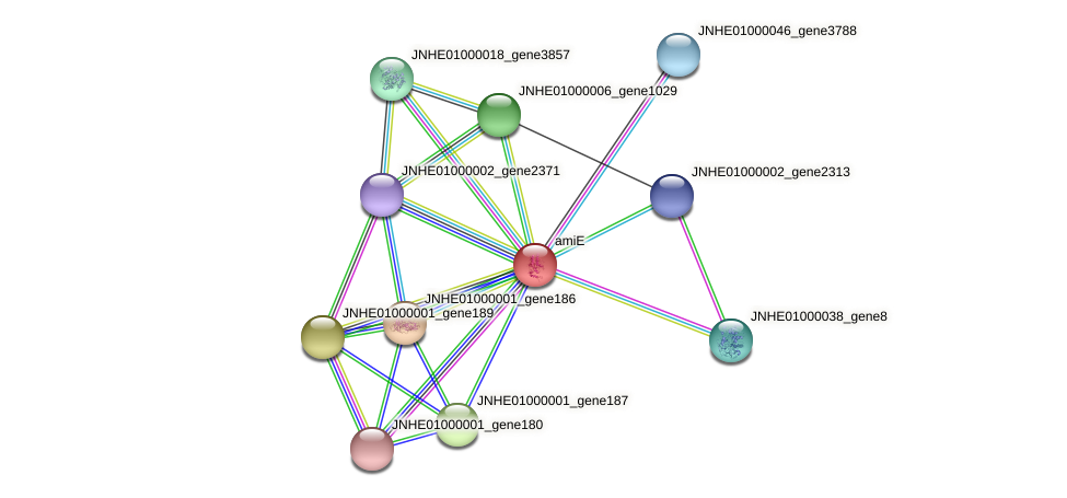 JNHE01000001_gene188 protein (Pseudomonas oleovorans) - STRING interaction network
