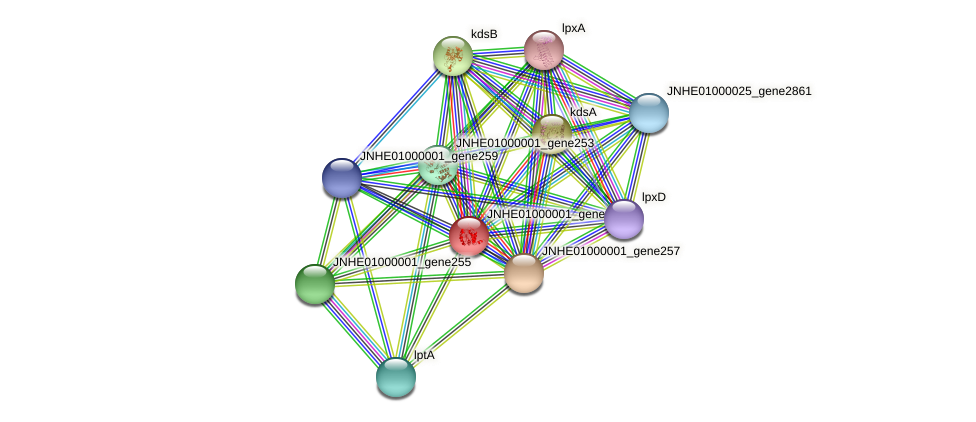 JNHE01000001_gene256 protein (Pseudomonas oleovorans) - STRING interaction network