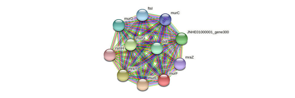murF protein (Pseudomonas oleovorans) - STRING interaction network