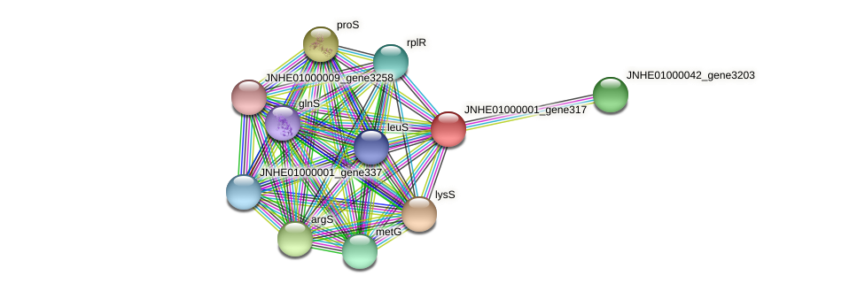 JNHE01000001_gene317 protein (Pseudomonas oleovorans) - STRING interaction network