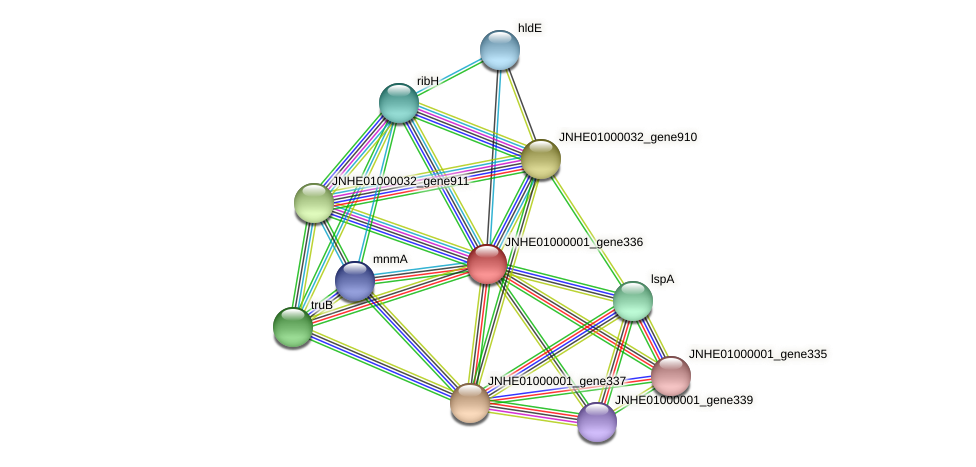 JNHE01000001_gene336 protein (Pseudomonas oleovorans) - STRING interaction network