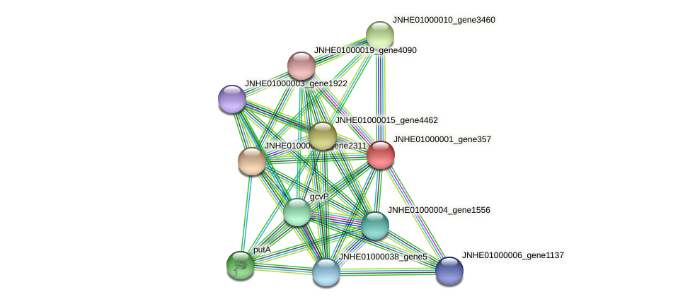 JNHE01000001_gene357 protein (Pseudomonas oleovorans) - STRING interaction network
