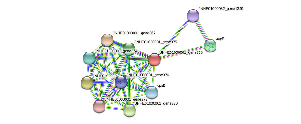 JNHE01000001_gene368 protein (Pseudomonas oleovorans) - STRING interaction network